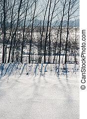 schaduwen, sneeuw, bomen