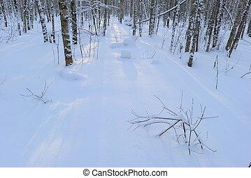 schaduwen, wite sneeuw, bomen