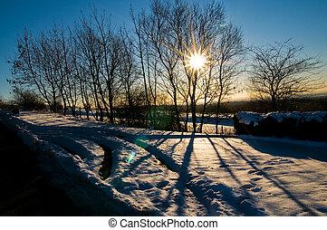 schaduwen, zon, sneeuw, bomen