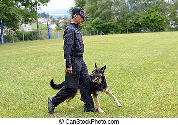 Schaefer geht bei Hundetrainer Fuss - Shepherd goes in dog...