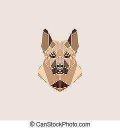 schafhirte, hund, porträt