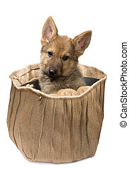 schafhirte, junger Hund,  Jute, Tasche