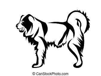 schafhirte, kaukasier, hund