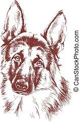 schafhirte, skizze, vektor, hund