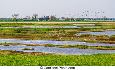 Schakerloopolder in tholen with many birds and rural buildings, countryside of Zeeland, the netherlands