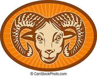 schapenhoofd, set, bighorn, binnen, ram, achtergrond, zonnestraal, of, oval.
