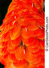 scharlaken macaw, veertjes, papegaai, rood