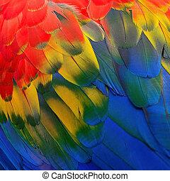 scharlaken macaw, veertjes