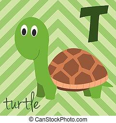 schattig, animals:, alphabet., illustration., gekke , alfabet, engelse , vrijstaand, dierentuin, geïllustreerd, vector, t, read., leren, turtle., spotprent