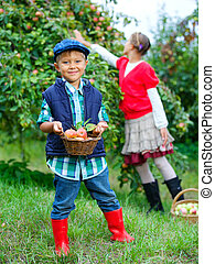 schattig, appel boomgaard, jongen