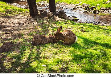 schattig, boedapest, konijnen, eiland, dierentuin, margaret, wild, konijntje