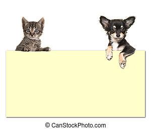 schattig, chihuahua, kamer, tekst, tabby, dog, gele kat, papierbord, achtergrond, vasthoudende baby, witte