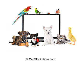 schattig, dieren, dichtbij, lcd, monitor