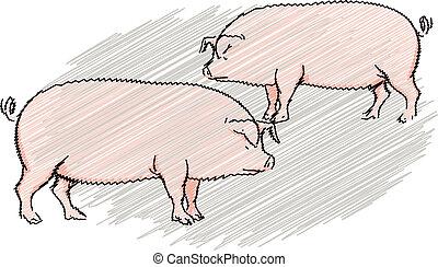 schattig, illustratie, varken