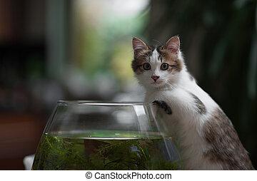 schattig, jonge, katje, en, een, vis kom