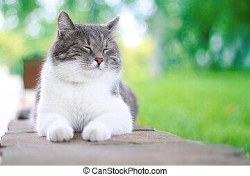 schattig, kat, het genieten van, zijn, leven, outdoors.