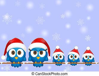 schattig, kerstmis, vogels