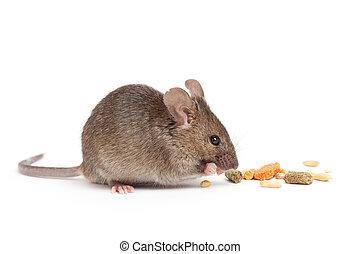 schattig, muis, eten, vrijstaand, op wit