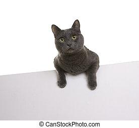 schattig, of, plakkaat, vrijstaand, tekst, kat, (sign), spandoek, jouw