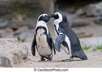 schattig, penguin