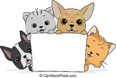 schattig, poezen, honden, plank