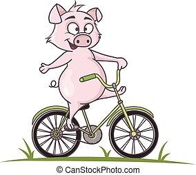 schattig, rijden, fiets, spotprent, varken