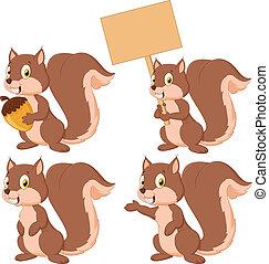 schattig, spotprent, verzameling, squirrel