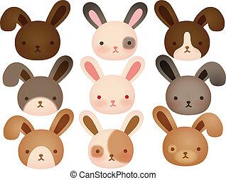 schattig, verzameling, konijn
