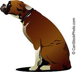 schattig, vuistvechter hond, zittende