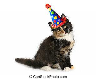 schattige, katje, op, een, witte achtergrond, met, verjaardag hoed