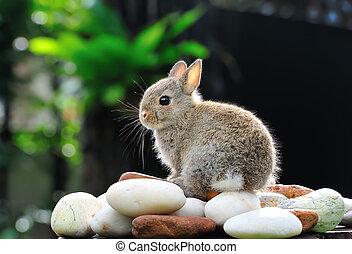 schattige, konijn, in de tuin