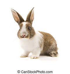 schattige, konijn, vrijstaand, op wit