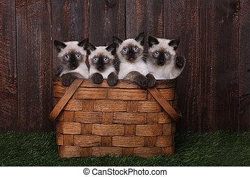 schattige, siamese, katjes, in, een, mand