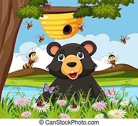 schauen, bienenkorb, bär