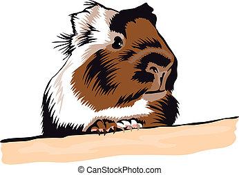 schauen, guinea, ungefähr, schwein