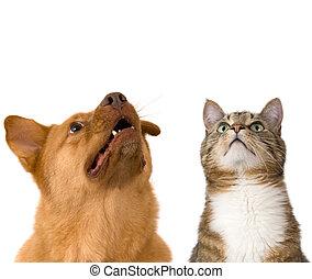 schauen, katz, hund, auf