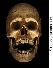 schedel, op, black