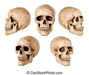 schedel, op wit
