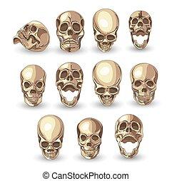 schedel, set, op wit, achtergrond, ., vector