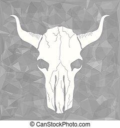 schedel, stier