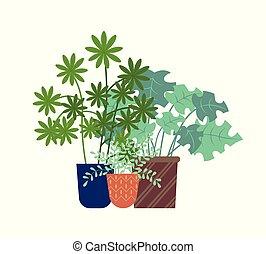 schefflera, 植物の 鍋, 群葉, 温室, 隔離された