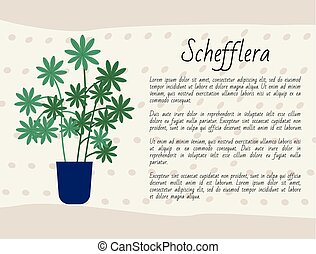 schefflera, 植物, houseplant, ポスター, ∥で∥, テキスト