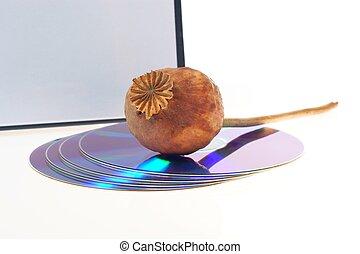 scheibe, und, mohnblume, -, sucht, computer, cd, dvd