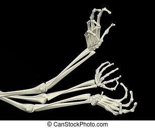 scheletrico, braccia