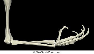 scheletrico, braccio, angolo retto