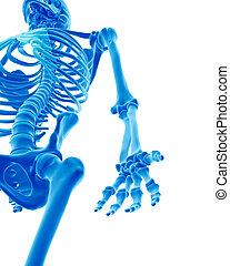 scheletrico, braccio