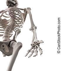 scheletrico, -, sistema, braccio