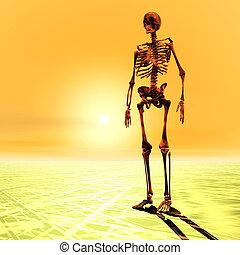 scheletro, illustrazione, digitale