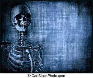 scheletro, pergamena