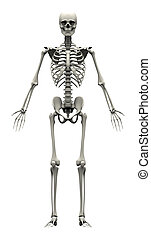 scheletro, -, umano, fronte, maschio, vista